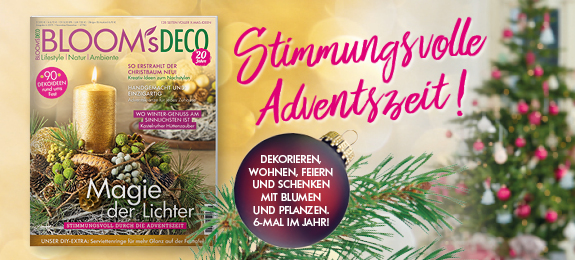 BLOOM's DECO November/Dezember 2019